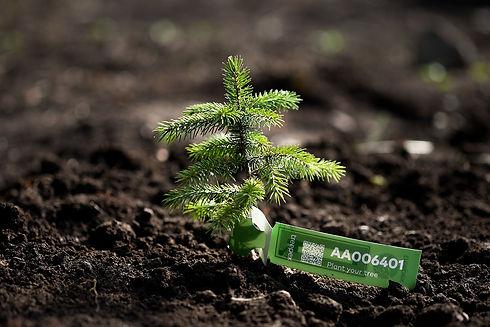 Tree for life.jpg