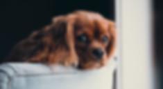 cute puppy on furniture