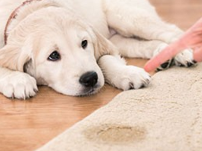 Don't use deodorizer to hide pet stains