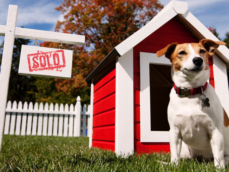 Millennials Buying Homes for their Pets