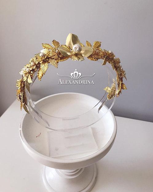 Crown Medinilla
