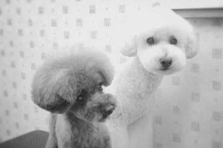 DOG GROOMING Zetto トリミングサロン
