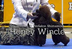 Honey Wincle