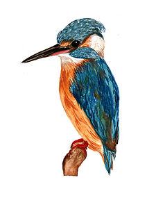 illustration naturaliste oiseau