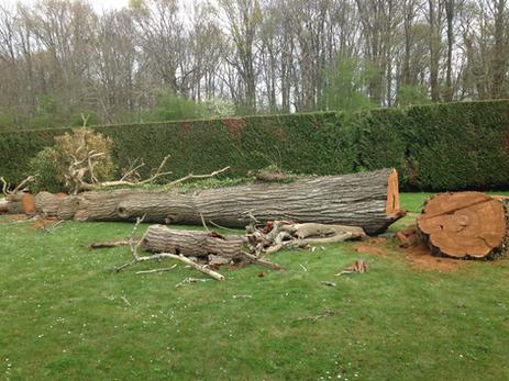Abattage d'un arbre mort