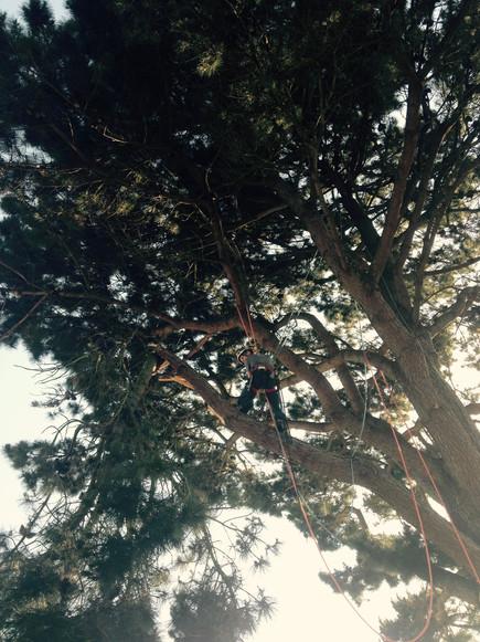 Elagage urgent d'une branche cassée au dessus d'une toiture
