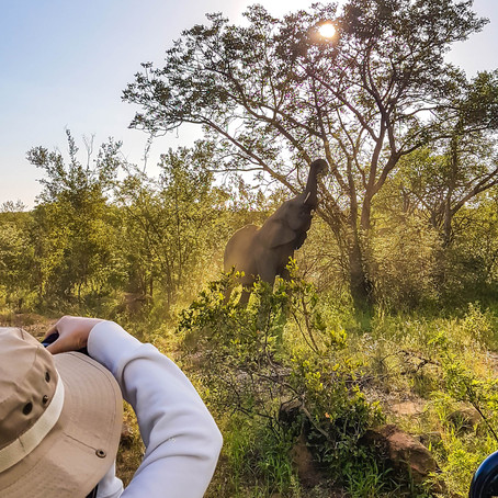 South African Safari: The Greater Kruger National Park