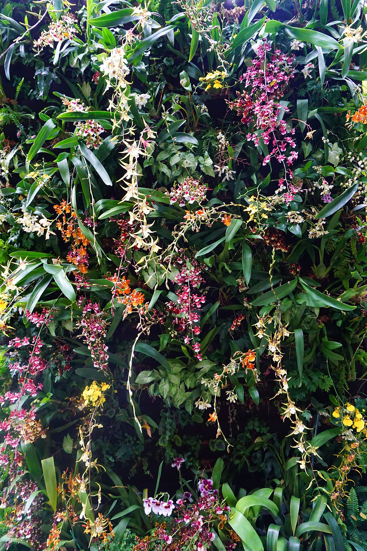 Flower wall at United States Botanical Gardens