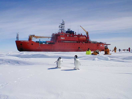Kingston and the Australian Antarctic Division