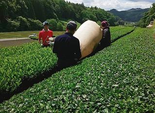 2020/05/24 収穫風景