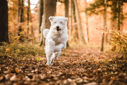 Hundefotograf Schweiz