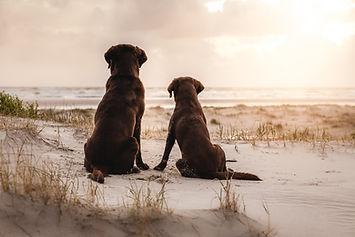 Fotografie von Hunden. Natürliche und einzigartige Hundebilder vom professionellen Fotograf in der Schweiz. Hundefotos, die die besondere Verbundenheit zwischen Hund und Herrchen oder Frauchen zeigen, stressfrei und mit viel Spass und Kreativität in der Natur fotografiert.