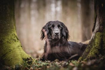 Hundefotograf_Thurgau