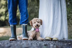 Hochzeitsfotografie Hund Schweiz