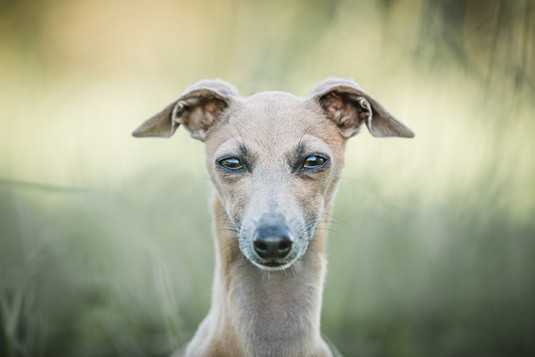 Hundefotografie_Zuerich