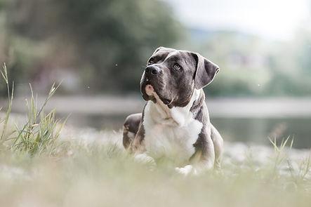 Tierschutz Fotografie Schweiz