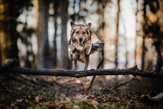 Hundefotografie_Action