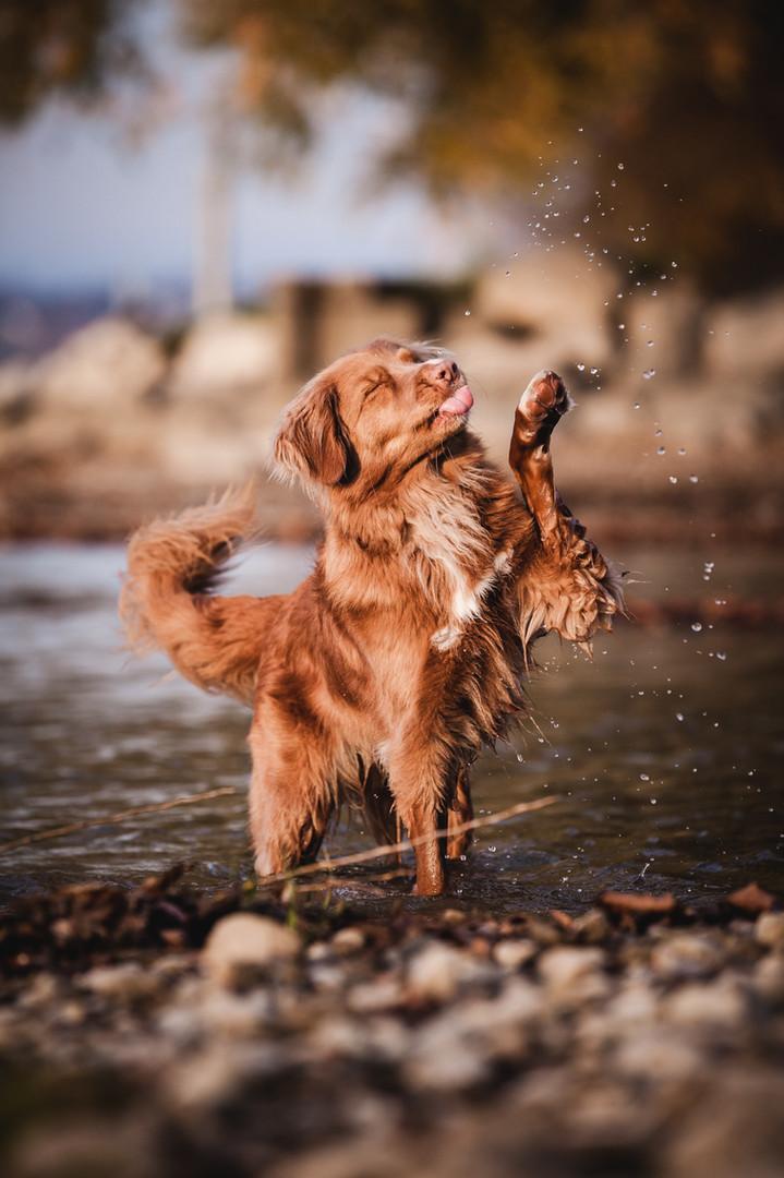 Hundefotografie_Bodensee