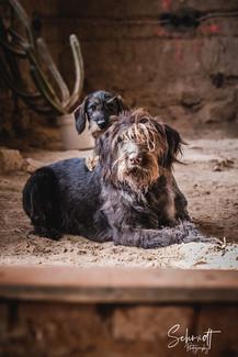 Fotoshooting Hund