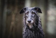 Hundefotografie_Winterthur