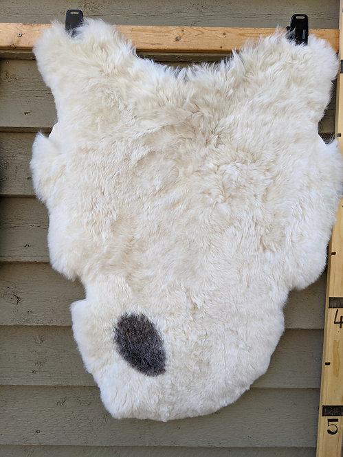 May #21 Fabulous shorn icelandic sheepskin
