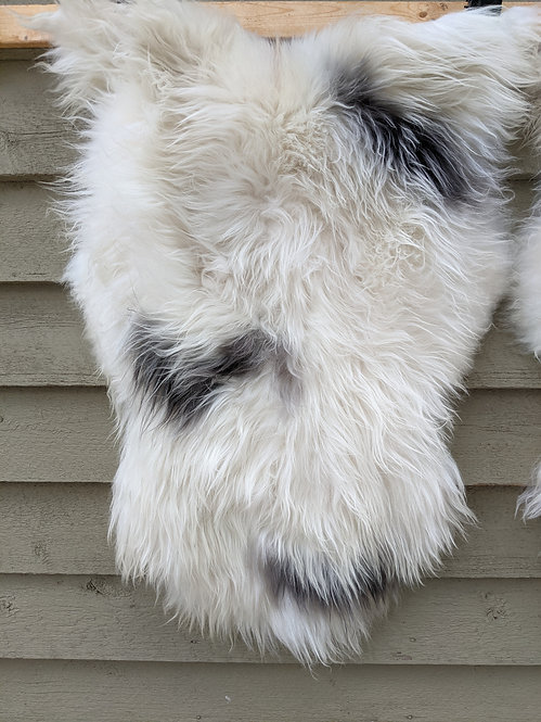 May #15 Massive icelandic sheepskin