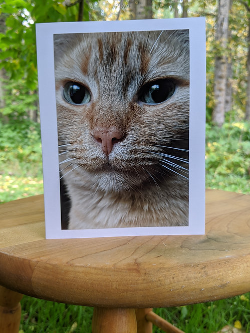 #1 Pack of 11 lovely cat greeting cards