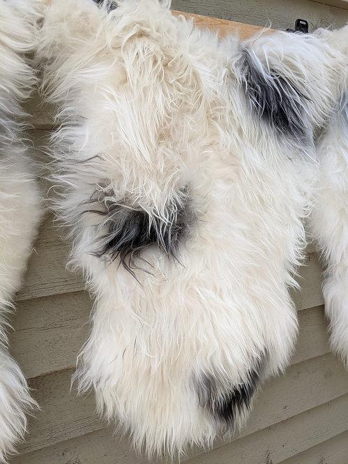 May #14 Massive icelandic sheepskin