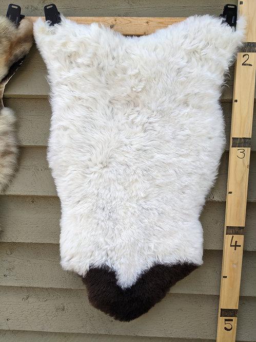 May#4 Fabulous shorn icelandic sheepskin