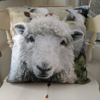 The snuggly sheep