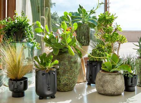Les plantes dépolluantes contre les ondes