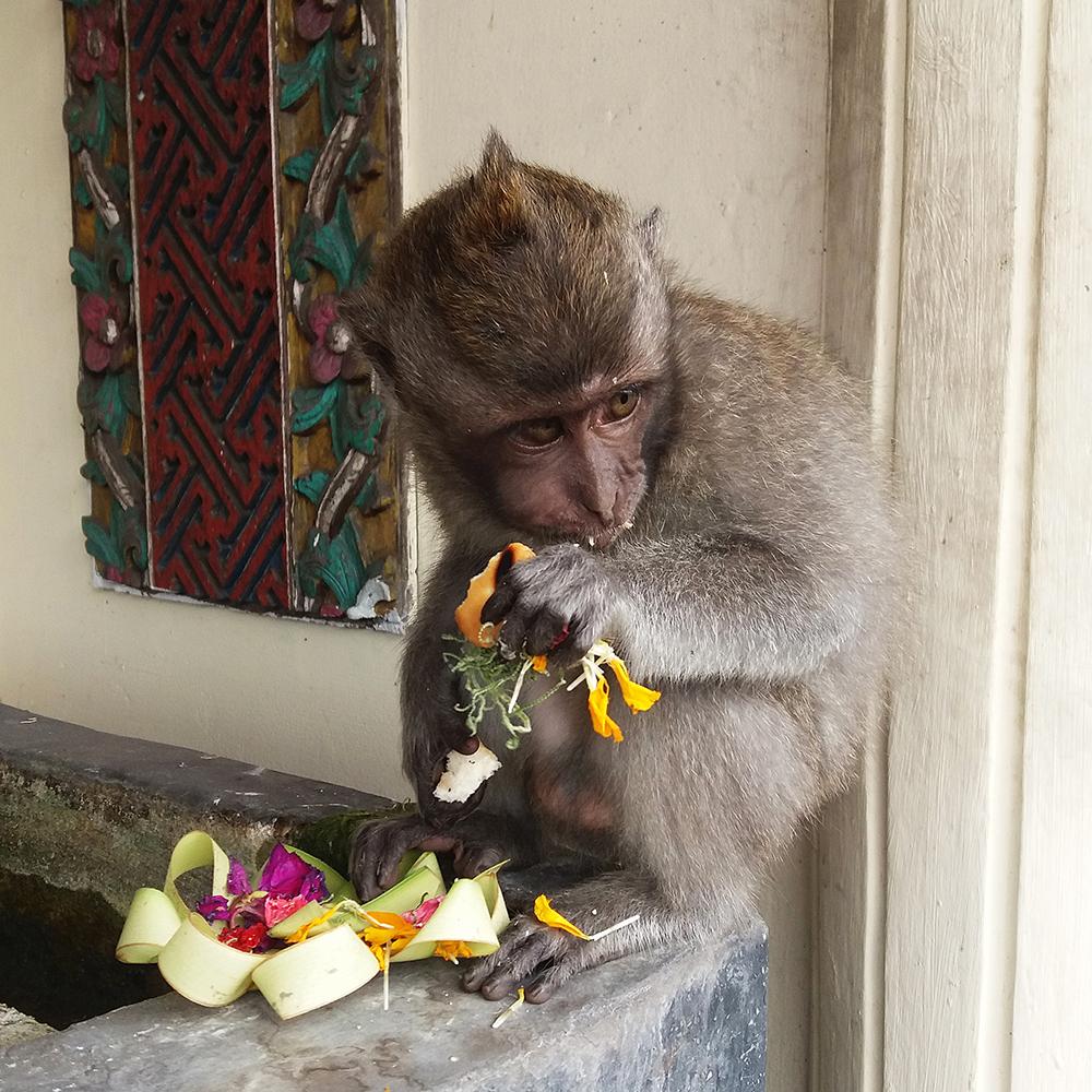 Munching monkey