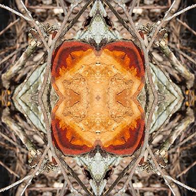 kaleidoscopic nature