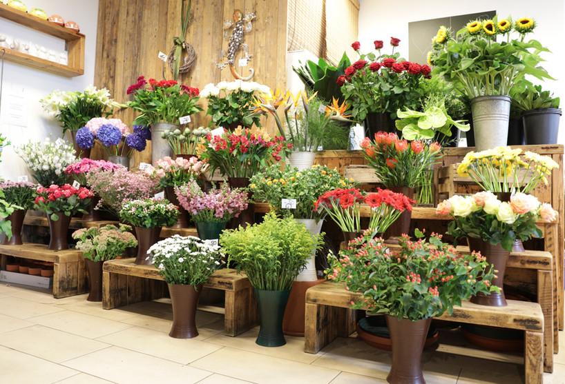 Blumen Schneitler in Krefeld