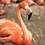 Thumbnail: Frannie Flamingo Paint by Number Kit by Pink Picasso