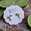 Thumbnail: Margarita Signature Enamel Studs by Prep Obsessed