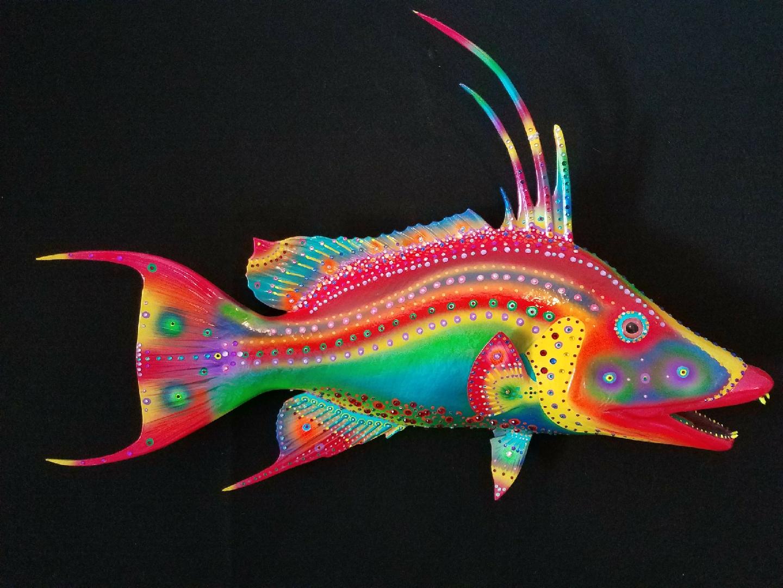 """29"""" Hogfish"""