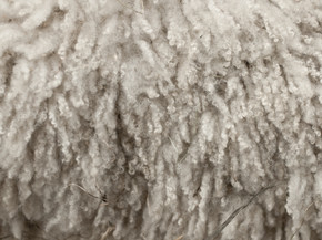 Pathway to a Resilient Fashion Industry with Wool Fiber