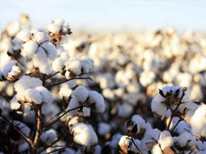 The Role of Regenerative Ecosystems in Sustainable Fashion