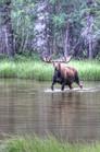 moose 6_tonemapped.jpg