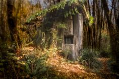Stump House 3 sm.jpg