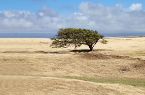 Wind Blowen Tree.jpg