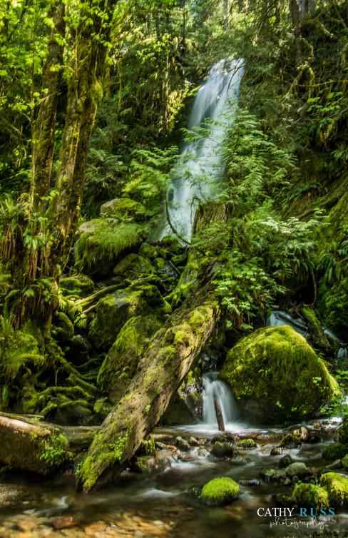 Quinault Fallssm.jpg