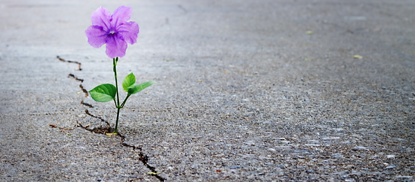 resilience_flowerconcrete_blog-oprcgouu2