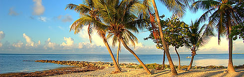 port-charlotte-branch---palm-trees-on-th