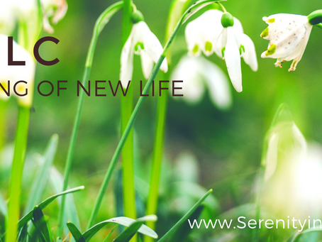 The Stirring of New Life - Imbolc