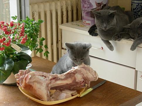 Dans le cochon, tout est bon!