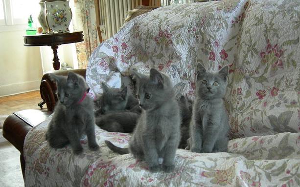 Les chatons au salon