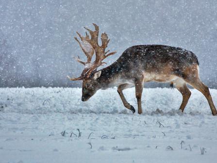 """Súťažná výstava fotografií """"Poľovníctvo a príroda"""""""