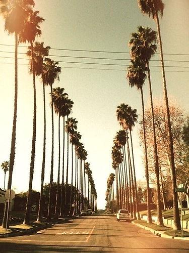 palmtrees_edited_edited.jpg